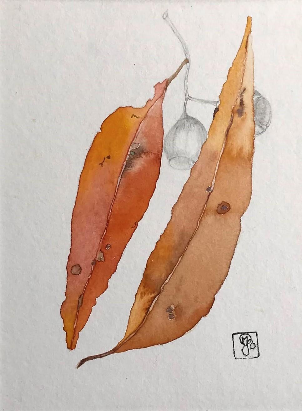 Corymbia No 2