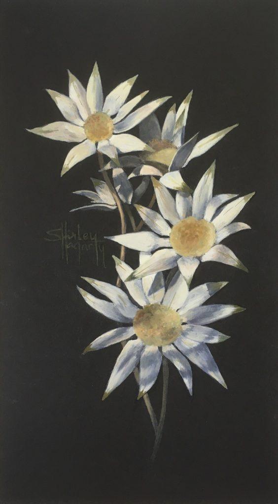 AOSE-Shirley Hagarty-Australian Flannel Flowers-cmzSr