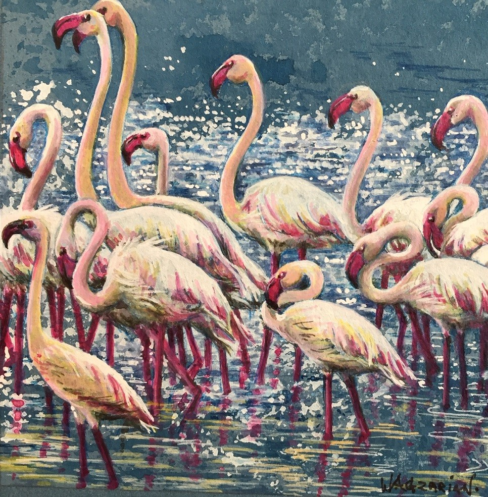 Colourful Flamingos