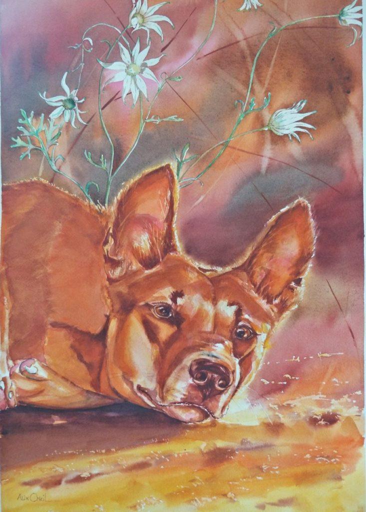 Dingo & Flannel flowers2-UzEvO-TVHz7