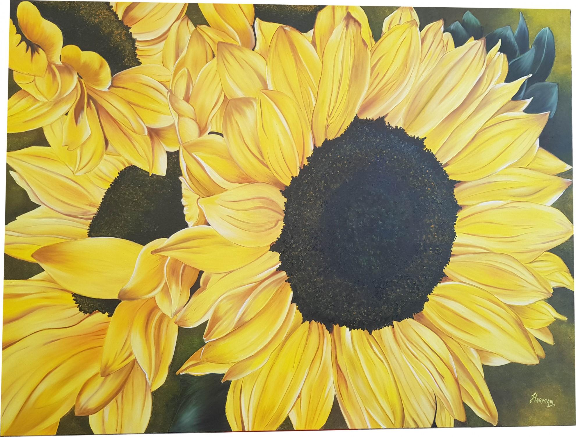 Awakening Sunflower